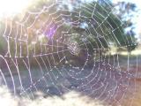 Cobwebs Everywhere!